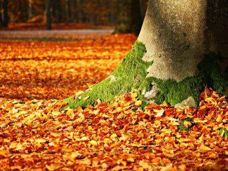 fall-foliage-1913485__340